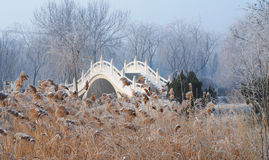 Chinese stone bridge. This is a Chinese stone bridge.It is white.After a snow,The weather is winter.There are much snow on the bulrush.The bulruch is yellow Royalty Free Stock Photography
