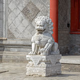 Chinese stone lion at the gate of Chinese temple Stock Photos
