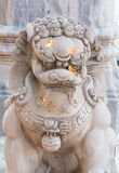 Chinese stone lion statue Royalty Free Stock Images