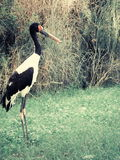 Chinese stork. The stork in the chinese style Stock Photos