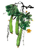 Chinese-style drawings, sketches, Loofah flower. Chinese-style drawings, sketches,Loofah pineapple painting royalty free illustration