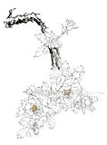 Chinese-style drawings, sketches, peony Stock Images