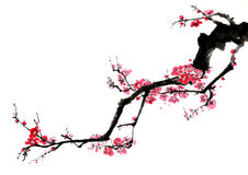Chinese-style drawings, sketches, plum flower Stock Image