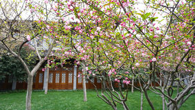 Chinese-style garden Stock Images