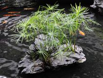 Chinese-style garden pond Royalty Free Stock Photos