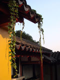 Chinese temple exterior. Ivy grows over the roof and yellow wall of a traditional Chinese temple Royalty Free Stock Photo