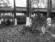 Chinese Temple in the forest with black and white trees. Kunming, Yunnan, China stock images