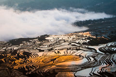Chinese terraces. Terraces in yunnan of china Stock Image