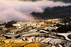Chinese terraces. Terraces in yunnan of china Royalty Free Stock Photo