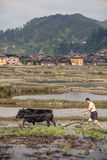 Chinese tiller cultivates land by using force a bull, Guizhou. Stock Photos