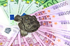 The Chinese toad of happiness. With three paws sits on money Stock Images