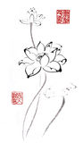 Chinese traditional distinguished gorgeous decorative hand-painted ink-water lily. Lotus Royalty Free Stock Images