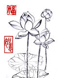 Chinese traditional distinguished gorgeous decorative hand-painted ink-water lily. Lotus Stock Image
