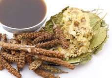 Chinese traditional herbs medicine drink stock images