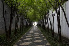 Chinese Tree Alley Royalty Free Stock Photography