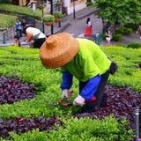 Chinese tuinlieden in Macao Stock Afbeelding