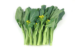 Chinese vegetable: Choy sum Royalty Free Stock Photography