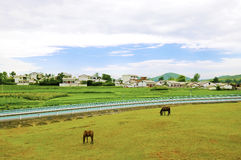 Chinese village,horse. Modern a village in guizhou china,the horse graze freely on the grass Royalty Free Stock Photos