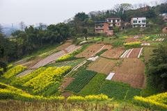 Chinese Village with Rapeseed Flowers Royalty Free Stock Photos