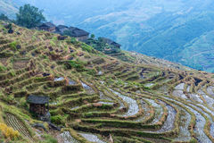 Chinese village and rice fields Stock Image