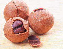 Chinese walnut Stock Photography