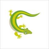 Chinese water dragon lizard vector illustration. Stock Photos