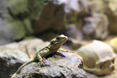 Chinese water dragon on stone Royalty Free Stock Photography