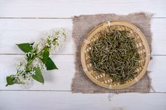 Chinese white tea and white lilac. Chinese white tea in bamboo dish and white lilac flowers on wooden background royalty free stock photography