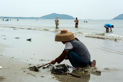 Chinese woman digging clams Royalty Free Stock Photography