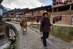 Chinese woman leads along village street brown cow, holding rope Royalty Free Stock Images