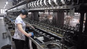 Silk worm cocoon processing China factory