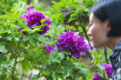 Chinese woman smelling flowers Stock Photography