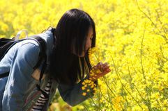 Chinese woman smelling rapeseed flowers Stock Photography