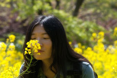 Chinese woman smelling rapeseed flowers Royalty Free Stock Photo