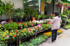 Chinese woman watering flowers Stock Images