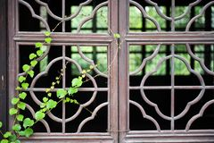 Chinese wooden window with green Royalty Free Stock Photography