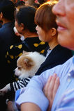 Chinese young women hold pet dogs in crowds watching entertainment Royalty Free Stock Images