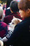 Chinese young women hold pet dogs in crowds watching entertainment Royalty Free Stock Photos