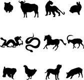 Chinese zodiac animals. Chinese 12 kinds of animals, on behalf of the people's property Royalty Free Stock Images