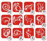 Chinese zodiac signs design. Zodiac symbols calligraphy art background Stock Photography