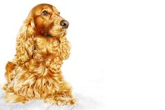 Yellow dog on white background. symbol of the year. Chinese zodiac, yellow earth dog, isolated on white background. symbol of year 2018 Stock Photos