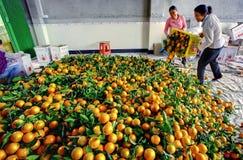 Chinesen werden von den Kastenorangen, Frucht im Großen Stapel entladen Stockfoto
