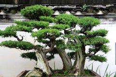 Chinesische alte traditionelle Architektur Stockfoto