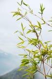 Chinesische Anstriche des Bambusses lizenzfreie stockbilder