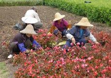 Chinesische Arbeitskraft, die Blumen pflanzt Lizenzfreie Stockbilder