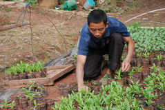 Chinesische Arbeitskraft, die junge Blumen pflanzt Stockbilder