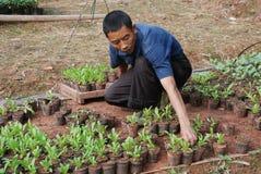 Chinesische Arbeitskraft, die junge Blumen pflanzt Lizenzfreies Stockfoto