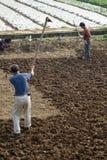 Chinesische Bauern pflügen das Feld Lizenzfreie Stockbilder