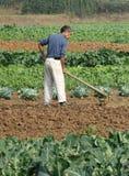 Chinesische Bauern pflügen das Feld Stockfotos