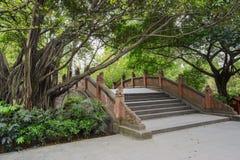 Chinesische Bogenbrücke und alte Bäume im Frühjahr Stockfoto